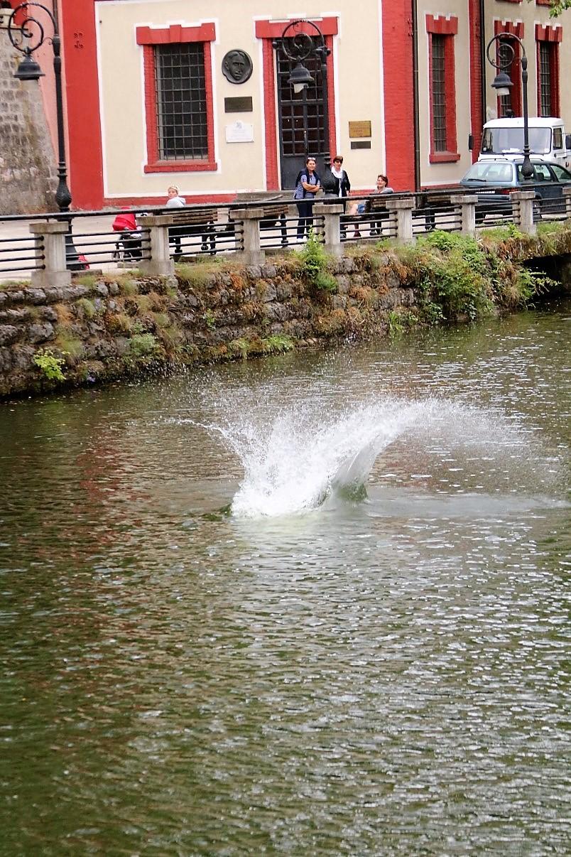 užice skokovi u vodu 16. jul 2017 (134)