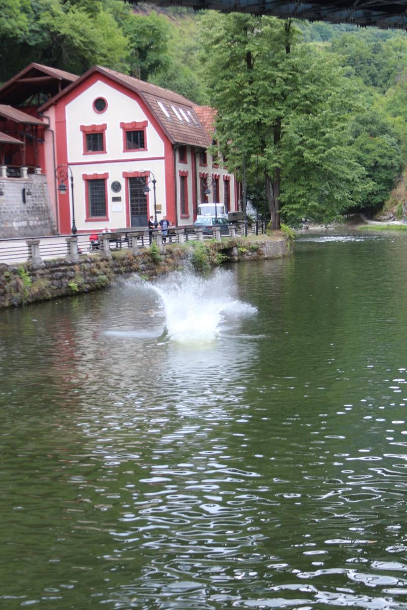 užice skokovi u vodu 16. jul 2017 (251)