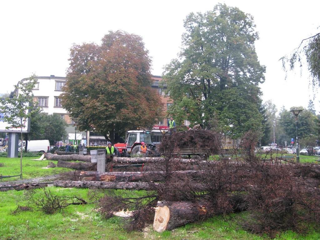Seča stabala u Malom parku