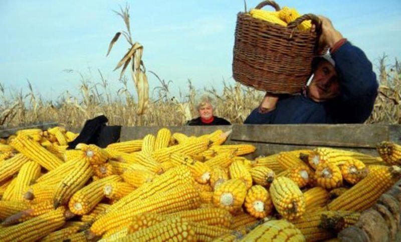 poljoprivredna-gazdinstva