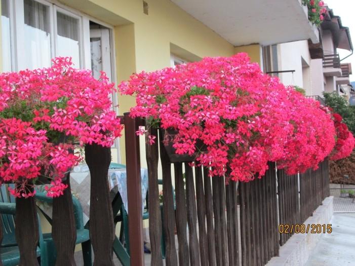 Biramo najlepšu terasu, dvorište, baštu…