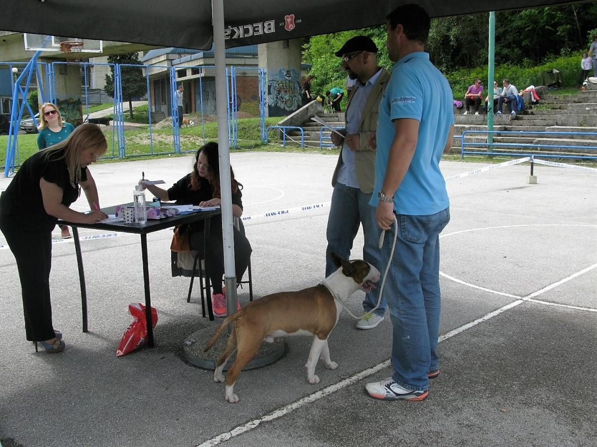 izložba pasa u užicu 2016 19