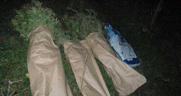 Заплењена огромна количина марихуане у Ариљу