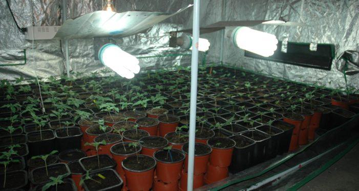 Лабораторија за узгој марихуане у Ужицу!
