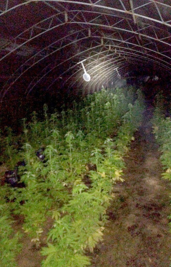 uhapšeni zbog uzgajanja indijske konoplje marihuane u arilju